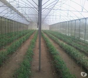 m2 de invernaderos productivos