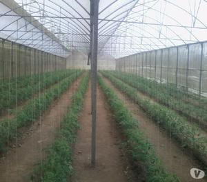 5000 m2 de invernaderos productivos
