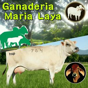 Venta de ganado lechero
