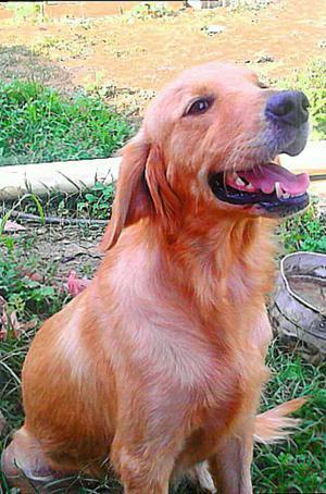 Recibo Perro en Adopcion 100 Responsabl