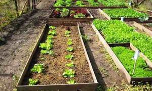 Programas De Siembra Y Cultivo (frutas, Granos Y Hortalizas)