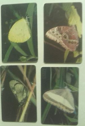 Cuatro Tarjetas Coleccionables De La Serie Mariposas