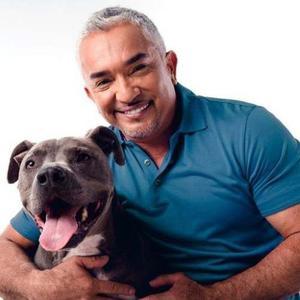 Libro El Encantador De Perros En Excelente Estado Y Como Nue