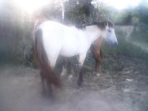 venta de 4 caballos 2 yeguas 1 potra y un caballo