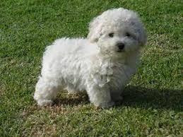Busco En Adopcion Cachorro
