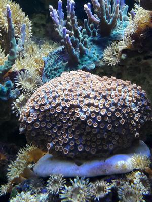 Decoracion natural acuario marino posot class - Decoracion acuario marino ...