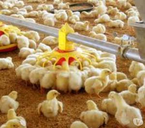 Venta de alimentos balanceados para animales