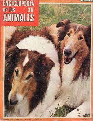 Revista Digital Escaneada - Enciclopedia De Los Animales