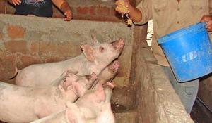 Manual De Cría De Conejo Y De Cerdo En Pdf