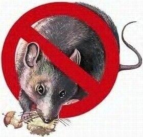 Veneno Para Ratas En Sobres