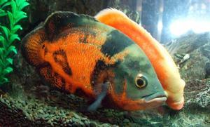 peces de todos los tipos