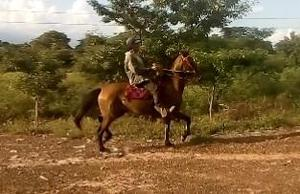 vendo hermosa yegua trotona muy briosa potro caballo