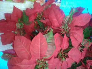 Flores De Navidad Y Arbolito De Navidad