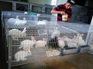 Conejos Selectivos ALTA GENÉTICA para Pie de Cría