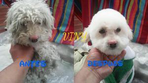 Peluqueria Canina Y Felina Domicilio