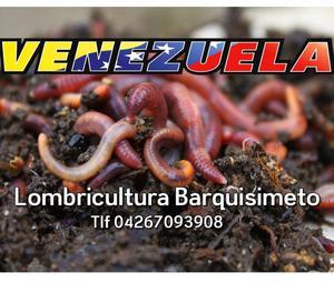 Venta de Lombrices Rojas Californianas en Venezuela