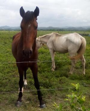 caballo y yegua