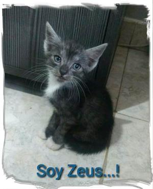 Lindos Gatos En Adopción
