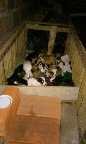 Se Dan En Adopción Estos Hermosos Cachorritos