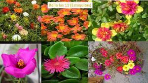Plantas De Jardín Bella Las 11 Oferta Día De Las Madres