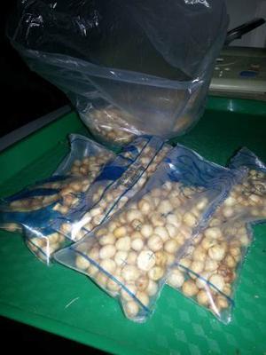 Semillas De Pitanga (Cerezas)
