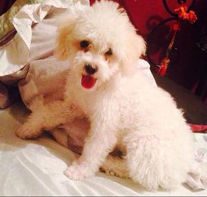 Doy en Adopcion a Mi Cachorra de 3 Meses
