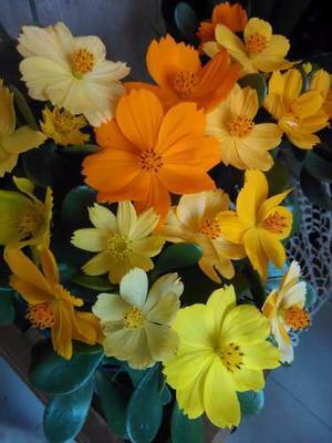 500 Semillas Flores Jardin Cosmo Multicolor Mas Obsequio