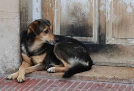perros en adopcion