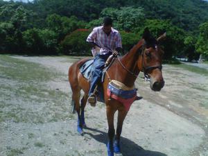 vendo caballo pura sangre! caballo, yegua, potro, potra