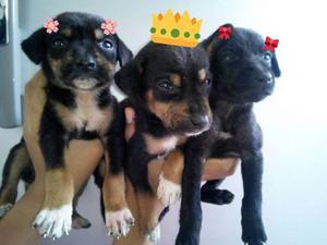 Perros. Cachorros Mestizos Para Donar. Desparasitados