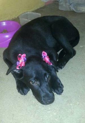 Perros Grandes Y Medianos En Adopcion