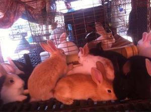 Conejos Gazapos