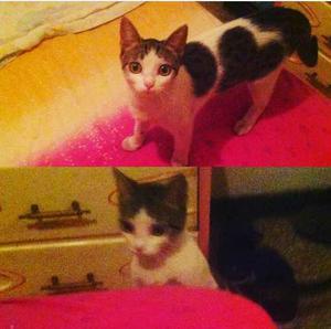 Gatica Esterilizada En Adopción!!