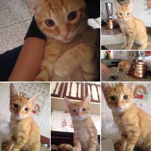 Gatito De 3 Meses (aprox) En Adopción!!!