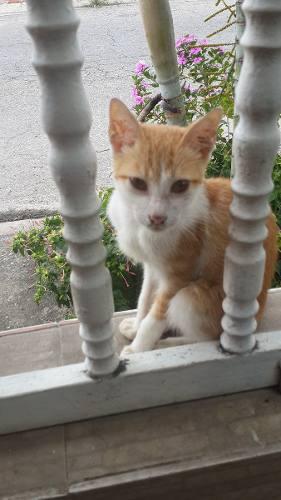 Gatos En Adopción Maracay