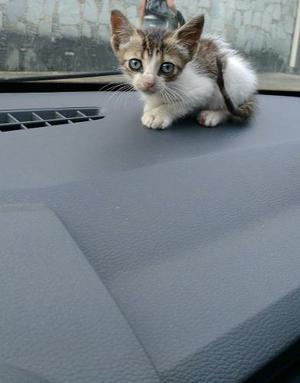 Hermoso Gatito De Aproximadamente 1 Mes
