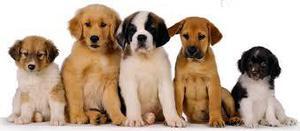 Cachorros Todas Las Razas CANINAS