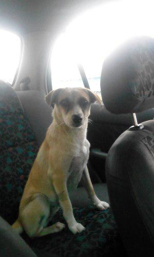 Perro En Adopción