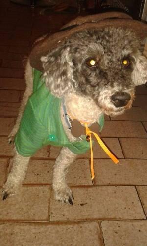 Ropa Para Perros, Camisas De Vestir Para Perritos Y Gatitos