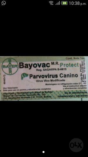 Vacuna Parvo Virus