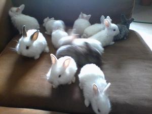 Conejos tiernos para mascotas ya desparasitados en Valencia