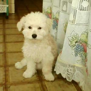 Quiero Adoptar