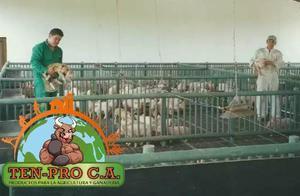 Pisos Plasticos Para Cochineras Cerdos,ovinos 1.44mt2 Docena