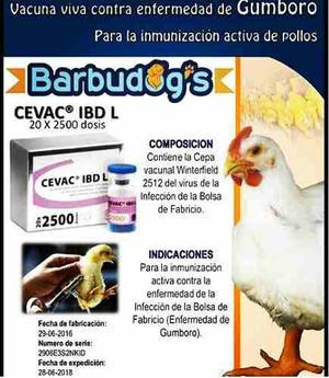 Biologicos Vacunas Para Pollo De Engorde