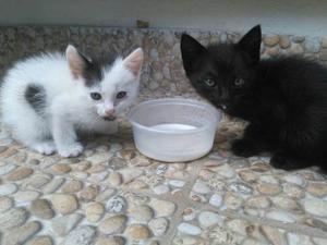 Perritos Y Gatos En Adopción