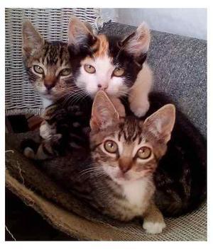 Gratis!!! Adopción Hermosos Gaticos De 6 Meses De Edad.