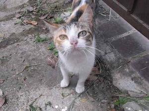 Hermosa Pareja De Gatos En Adopcion Operados