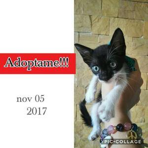 Hermoso Gatito En Adopción!!