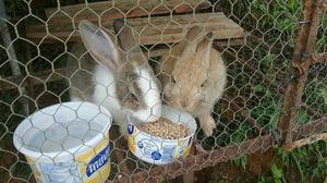 Conejos para Cría