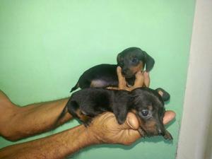 Acepto Perros Adopción